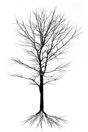high contrast: Tree structure - isolated