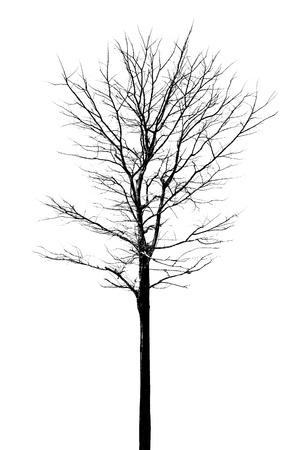 dode bladeren: Boom zonder bladeren