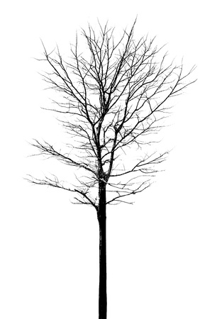 Tree with no leafs Stock Photo - 18819942