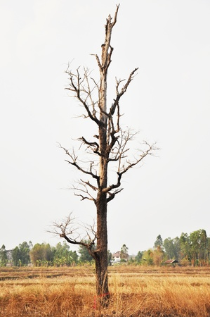 Dry tree in wilderness photo