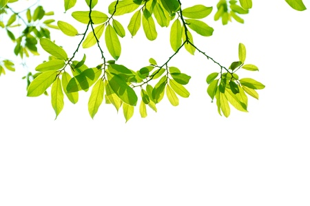leave: Yellow and green Leaf background