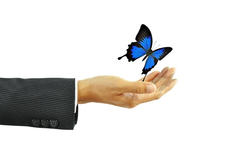 Businessman hand releases blue butterfly Stock Photo - 19917468