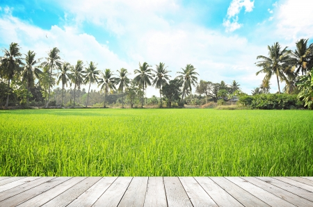 Wooden board on rice field photo