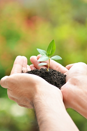 Hands holding young plant with soil Stock Photo