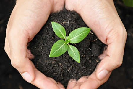 forest conservation: Hands holding young plant with soil Stock Photo