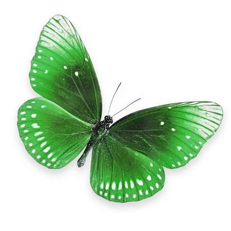 sweet stuff: Green butterfly flying Stock Photo