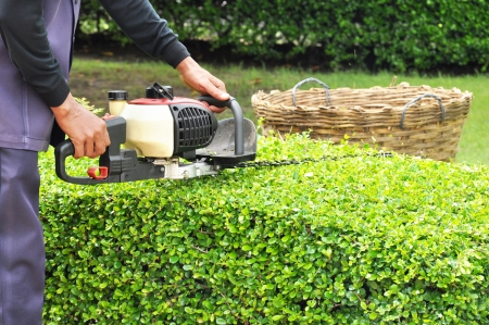 maintenance man: A man trimming hedge with trimmer machine