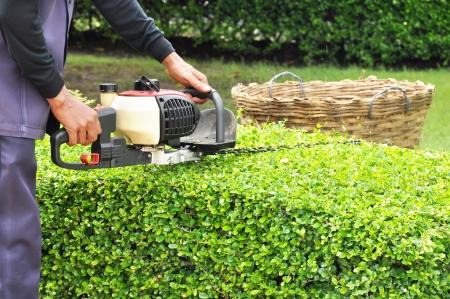 jardinero: Un hombre seto del recorte con la máquina cortadora