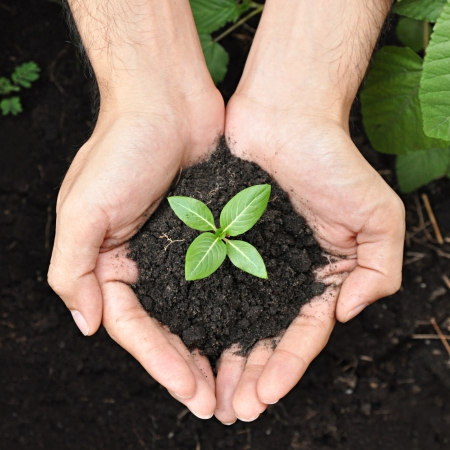 Hands holding young plant with soil photo