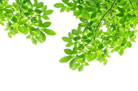tree branches: Green leaf background - border design