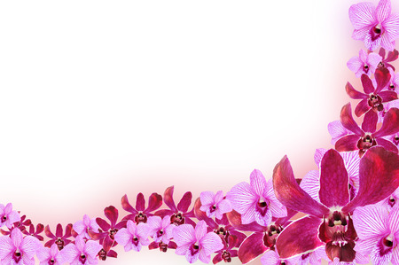 lei: Purple Orchid flowers - border design