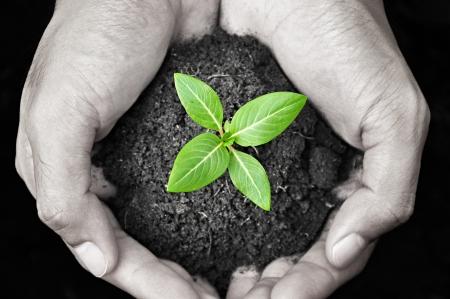 Handen die groene spruit met bodem Stockfoto