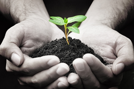 grow: Hands holding green sprout with soil