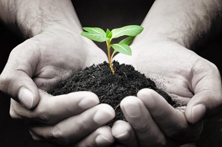 deforestacion: Manos que sostienen brotes verdes con tierra