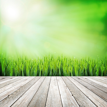 wooden deck: Wooden deck on green natural abstract background