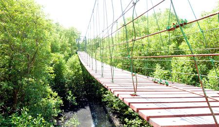 rope bridge: Suspension bridge  or rope bridge  over mangrove forest
