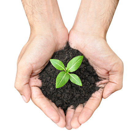Hand holding green seedling with soil photo
