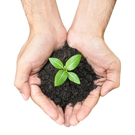 new start: Hand holding green seedling with soil