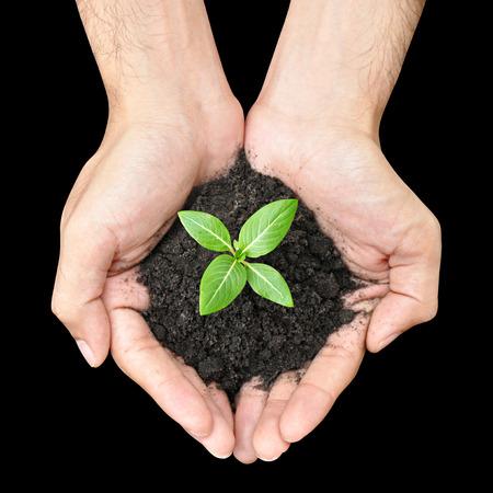 deforestacion: Mano que sostiene la planta de semillero verde con tierra Foto de archivo