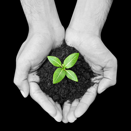 black and white plant: Hand holding green seedling with soil