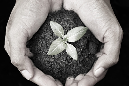 agricultural life: Hand holding seedling with soil - monochrome Stock Photo
