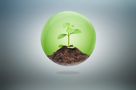 Green seedling with soil inside glossy ball - conservation concept photo