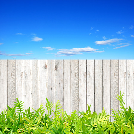 fence panel: Wood fence with green fern leaves at the bottom