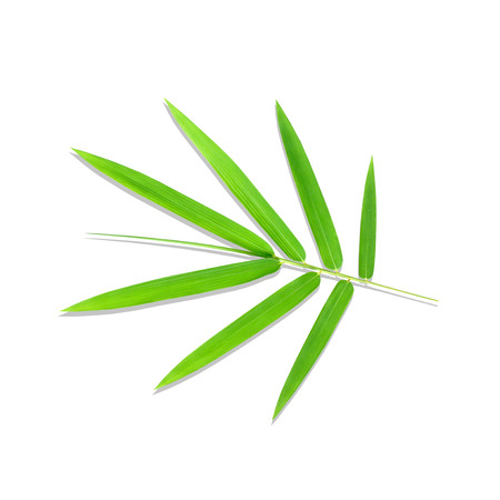 tip of the leaf: Young green bamboo leaves isolated on white background Stock Photo