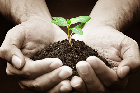 Hands holding green sapling with soil photo