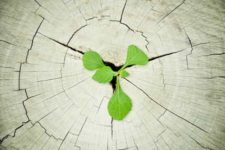 regeneration: Green seedling growing from tree stump - regeneration and development concept