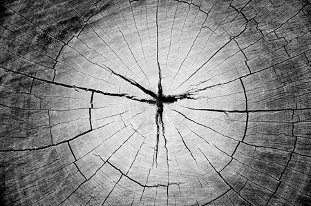 Dry old cracked tree stump texture photo