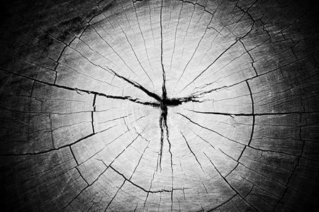 Dry old cracked tree stump texture with lomo effect photo