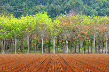 Wooded floor with rubber tree plantation