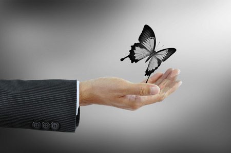 hand butterfly: Hand releaasing a butterfly  - business abstract Stock Photo
