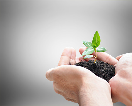 conservationist: Hand holding sprout with soil, environment conservation concept - border design with copy space
