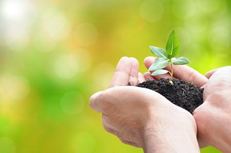 Hand houden van spruit met bodem, milieu behoud concept - grens ontwerp met een kopie ruimte
