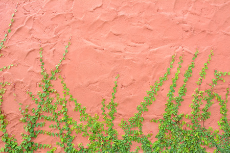Ivy or climbing plant on vintage color concrete wall