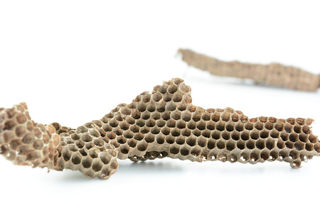 hives: Dried honeycombs (bee hives) on white background Stock Photo