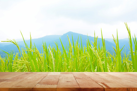 rice harvest: Wood table top on green rice field and mountain background