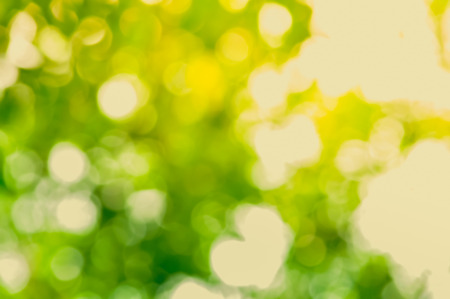 background light: Natural green bokeh abstract background Stock Photo