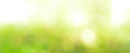 Abstract light green bokeh panoramic header background Stock Photo