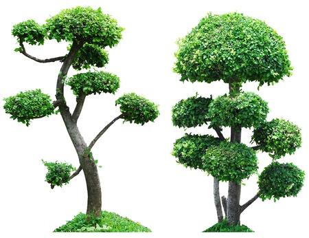 Trees isolated on white background photo