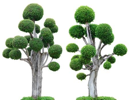 albero della vita: Alberi isolati su sfondo bianco Archivio Fotografico