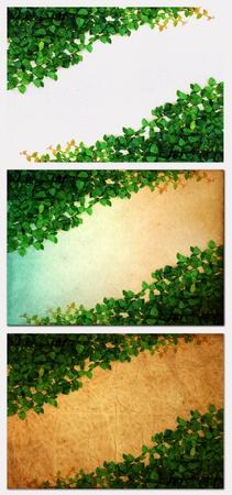 edad de piedra: La planta de enredadera verde sobre papel viejo Foto de archivo