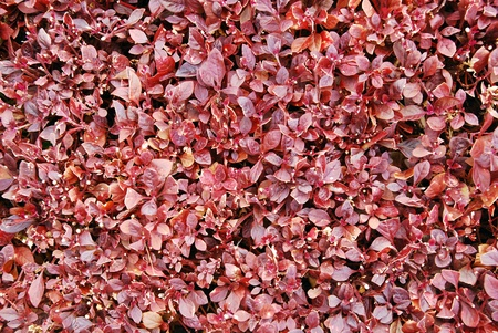 Pink leaves wall  photo