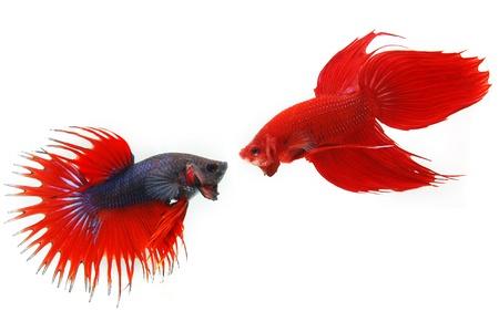 La lutte contre les poissons Banque d'images