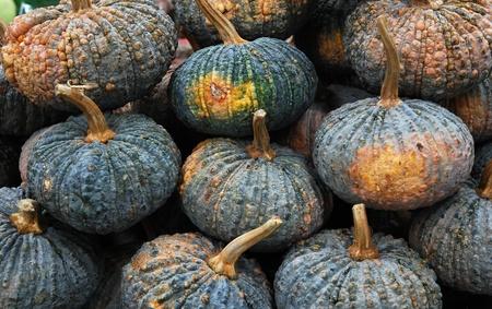 gourds: Pumpkins Stock Photo