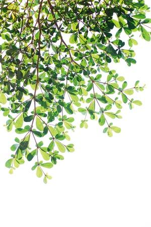 Vert texture de fond congé