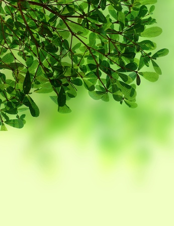 Green leave background texture