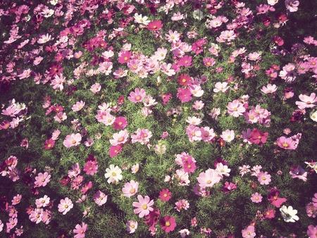 Flowers background Vintage          Stock Photo